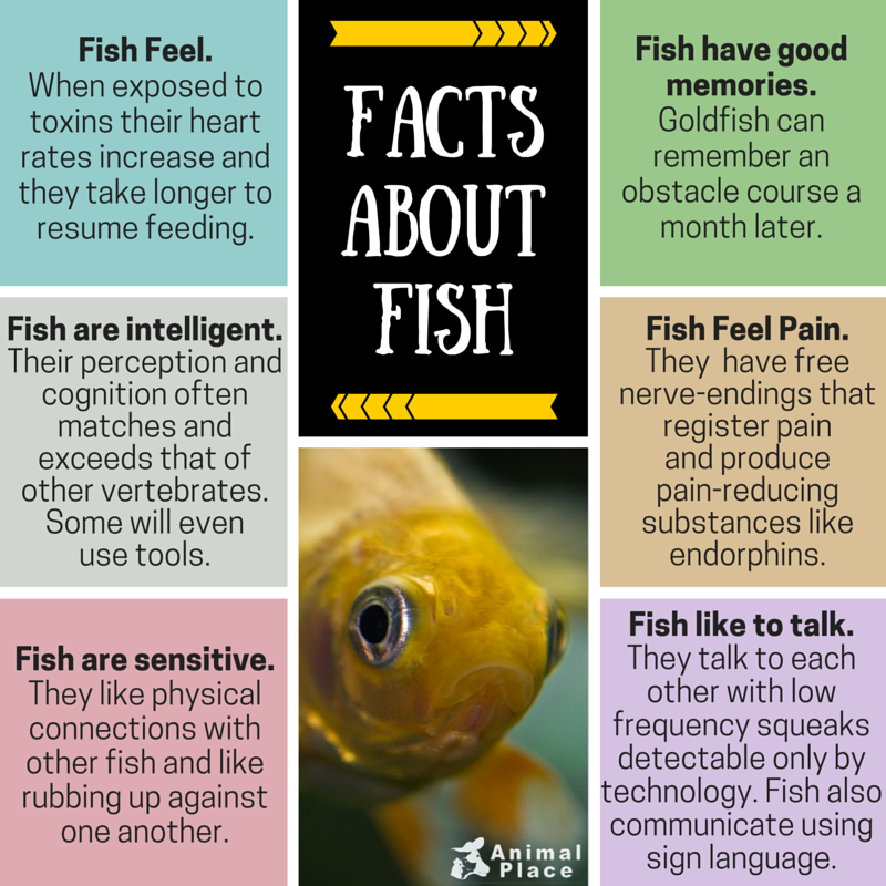 FACTS ABOUT FISH