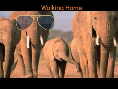 ELEPHANTS WALKING HOME